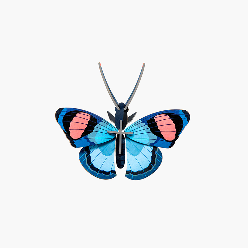 AMODO Studio Roof Peacock Butterfly